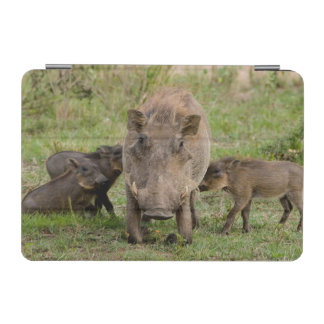 Three Warthog Piglets Suckle On Their Mother iPad Mini Cover