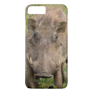 Three Warthog Piglets Suckle On Their Mother iPhone 8 Plus/7 Plus Case