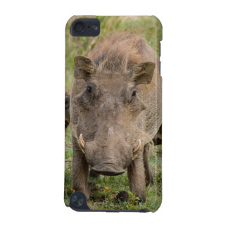 Three Warthog Piglets Suckle On Their Mother iPod Touch 5G Cover