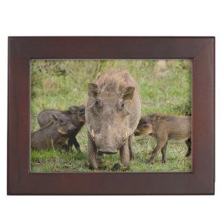 Three Warthog Piglets Suckle On Their Mother Keepsake Box
