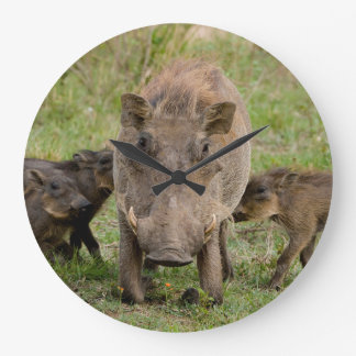 Three Warthog Piglets Suckle On Their Mother Large Clock