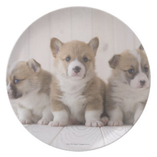 Three Welsh Corgi Dinner Plates
