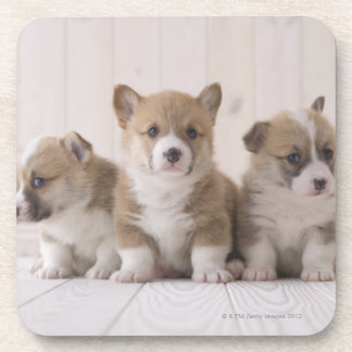 Three Welsh Corgi Drink Coasters