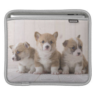 Three Welsh Corgi iPad Sleeve