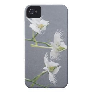 Three White Egret Orchids iPhone 4 Case-Mate Case