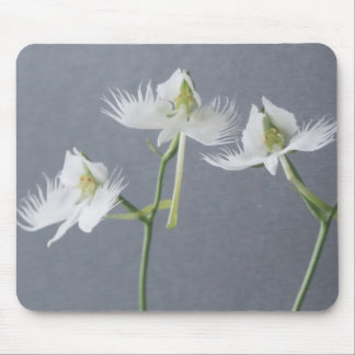Three White Egret Orchids Mouse Mat