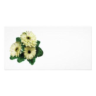 Three White Gerbera Daisies Custom Photo Card
