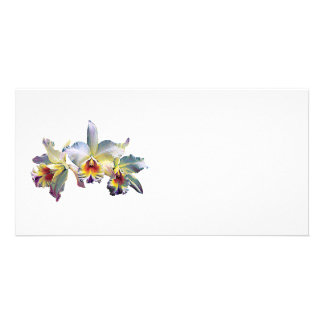 Three White Orchids Photo Greeting Card