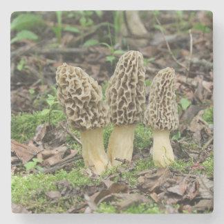 Three wild morel mushrooms in the woods stone coaster