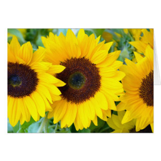 Three yellow sunflowers print greeting card