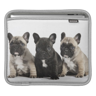 Threee Pedigree Puppies iPad Sleeve
