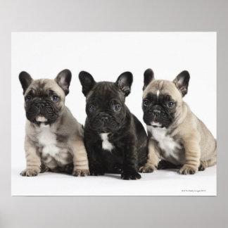 Threee Pedigree Puppies Posters