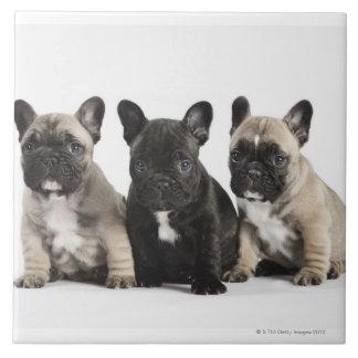Threee Pedigree Puppies Tile