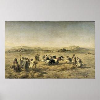 Threshing Wheat in Algeria, 1853 Poster