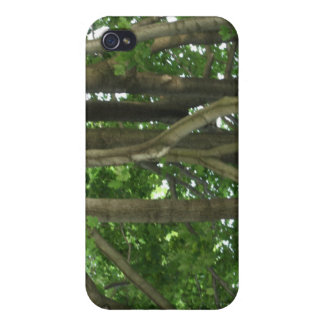 Through the forest of trees iPhone 4 cases
