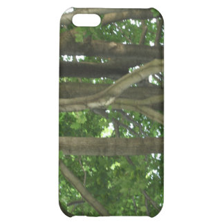 Through the forest of trees iPhone 5C covers