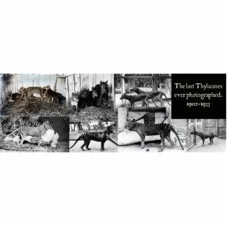 Thylacine Photos Cutout Magnet/Sculpture Standing Photo Sculpture