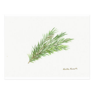 Thyme herb botanical plant art print postcard