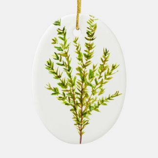 Thyme herbs Botanical herb Ceramic Oval Decoration