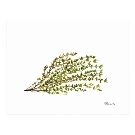 Thyme herbs kitchen art watercolour painting postcard