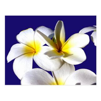 ti plant flowers yellow white blue back jpg postcards