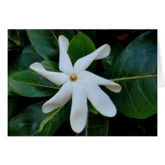 Tiare Tahitian Gardenia Card