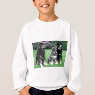 Tibetan Mastiff Puppy with adults Sweatshirt