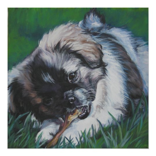 tibetan spaniel puppy art print