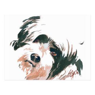 Tibetan Terrier portrait Postcard