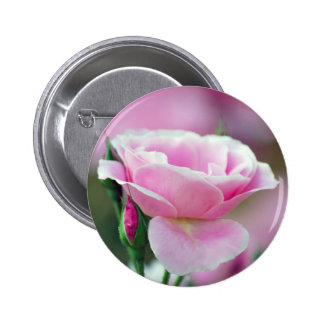 Tickled pink rose and meaning 6 cm round badge
