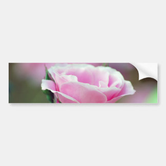 Tickled pink rose and meaning bumper stickers