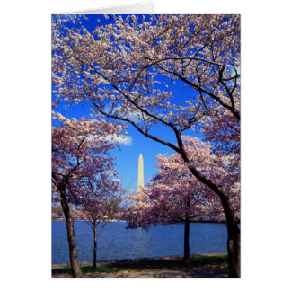 Tidal Basin Cherry Blossoms Greeting Card