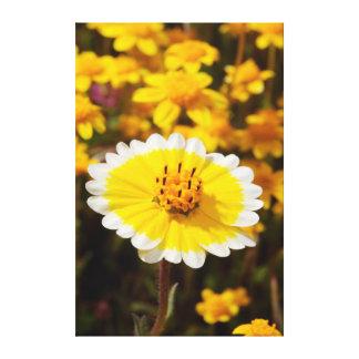Tidy Tip Wildflowers Canvas Print