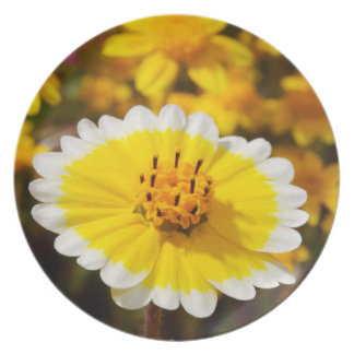 Tidy Tip Wildflowers Plate