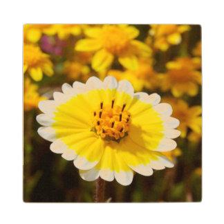 Tidy Tip Wildflowers Wood Coaster