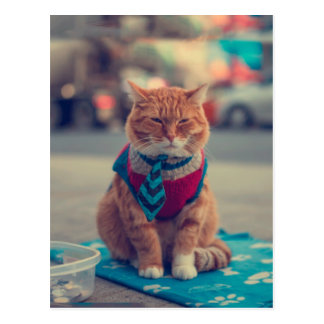 Tie Beige Cat Sitting Begging Postcard