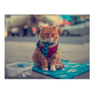 Tie Beige Cat Sitting Begging Postcard