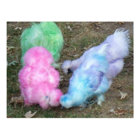 Tie Dyed Silkie Chickens in Pastel Easter Colours Postcard