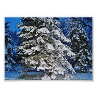 Tiers of Snow 7x5 Photographic Print