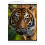 tiger2 cards