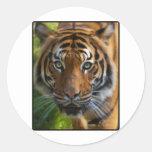 tiger2 classic round sticker