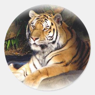 Tiger_1151 Classic Round Sticker