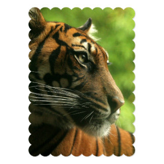 "tiger-138.jpg 5"" x 7"" invitation card"
