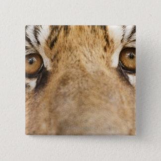Tiger 15 Cm Square Badge