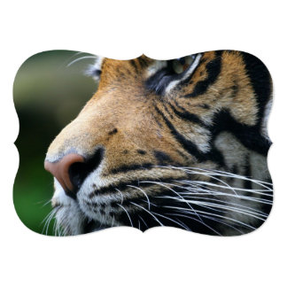 "tiger-45 5"" x 7"" invitation card"
