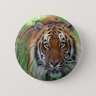 Tiger 6 Cm Round Badge