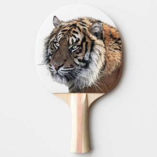 Tiger animal wild jungle zoo photo ping pong paddle