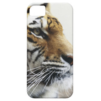 Tiger. Asahiyama Zoo, Hokkaido, Japan Barely There iPhone 5 Case
