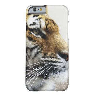Tiger. Asahiyama Zoo, Hokkaido, Japan Barely There iPhone 6 Case