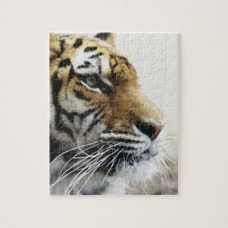 Tiger. Asahiyama Zoo, Hokkaido, Japan Jigsaw Puzzle